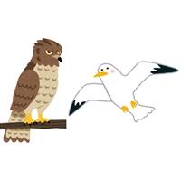 bird_taka-horz.jpg