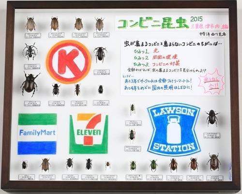 コンビニチェーン毎での灯りに寄る虫の標本
