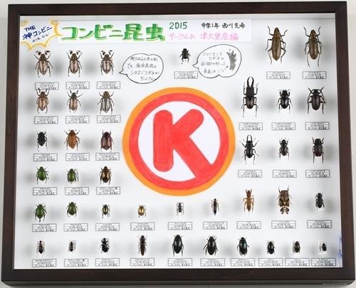 コンビニサークルKサンクスの灯りに集まる虫の標本
